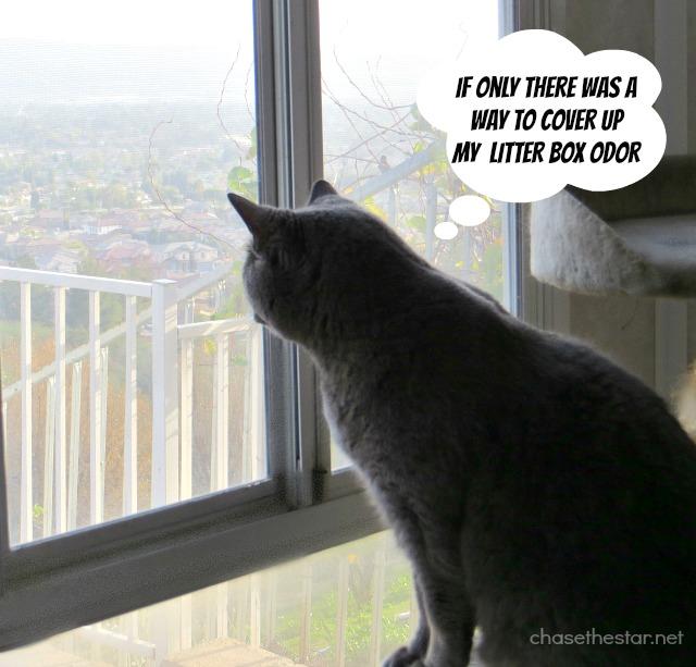 Cat genie hook up
