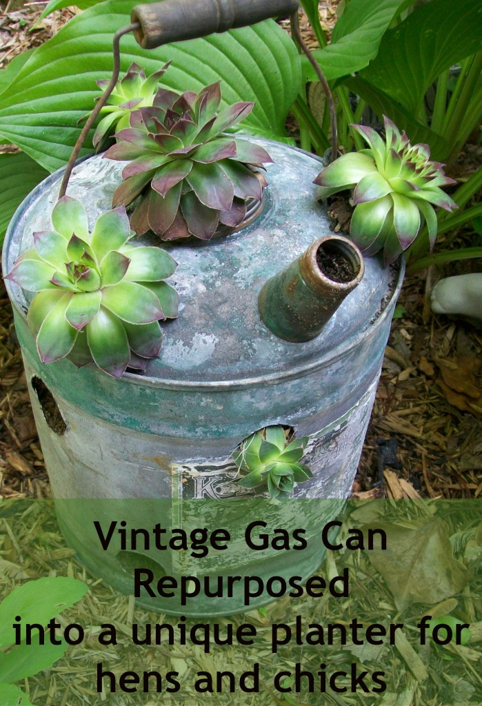repurposed-gas-can-planter-hens-chicks-699x1024