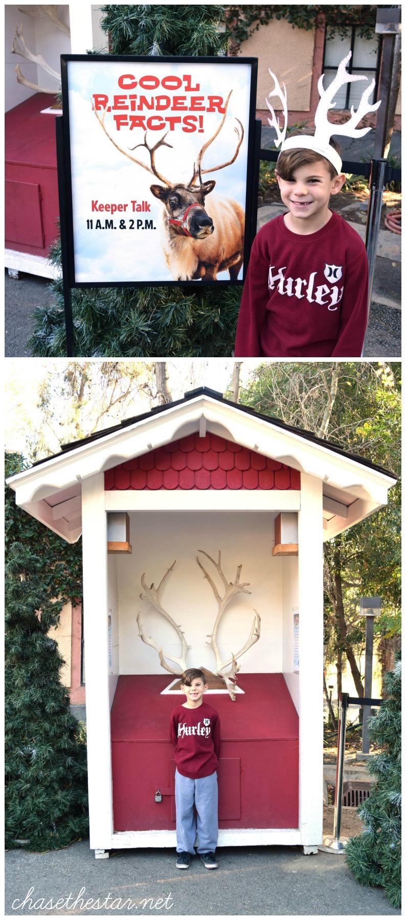 #ReindeerRompLA
