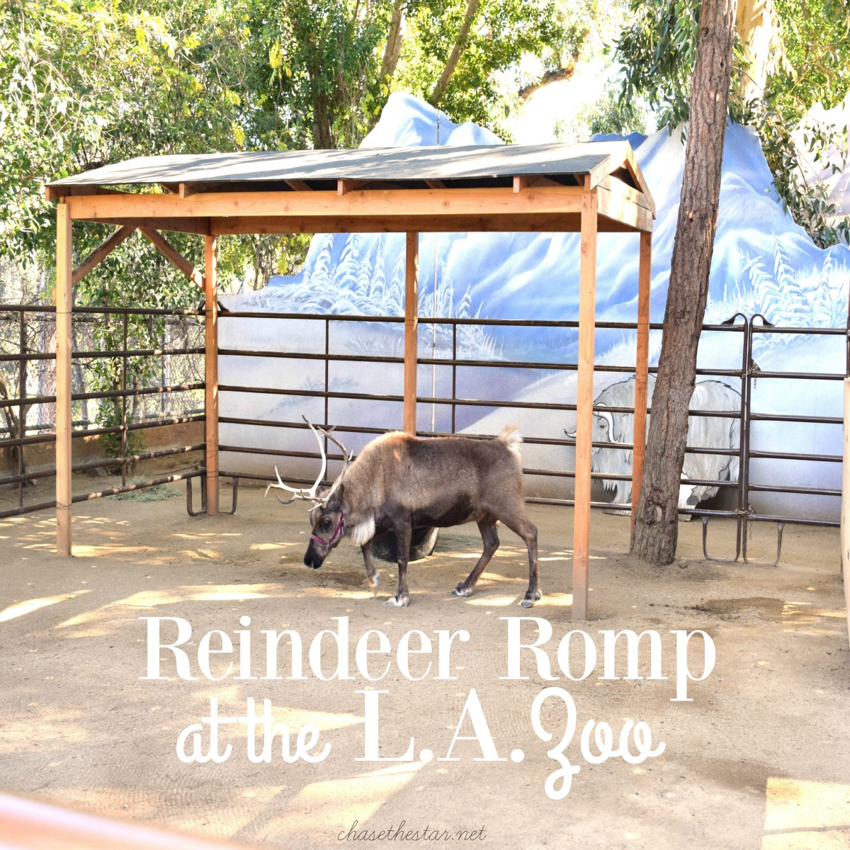 #ReindeerRompLA Celebrate the holidays at the zoo!